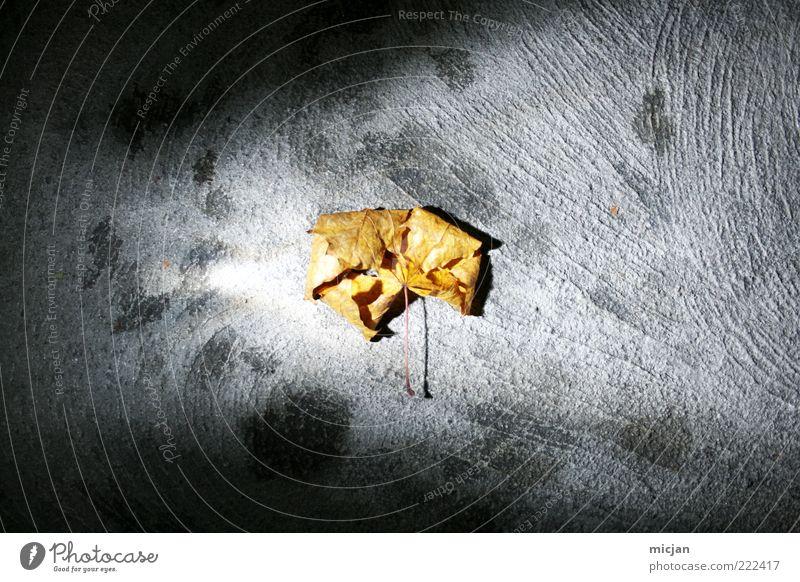 Autumn Leaf |Dying Halo alt Blatt gelb dunkel Herbst grau hell Beleuchtung liegen Boden Wandel & Veränderung Vergänglichkeit Mitte trocken leuchten