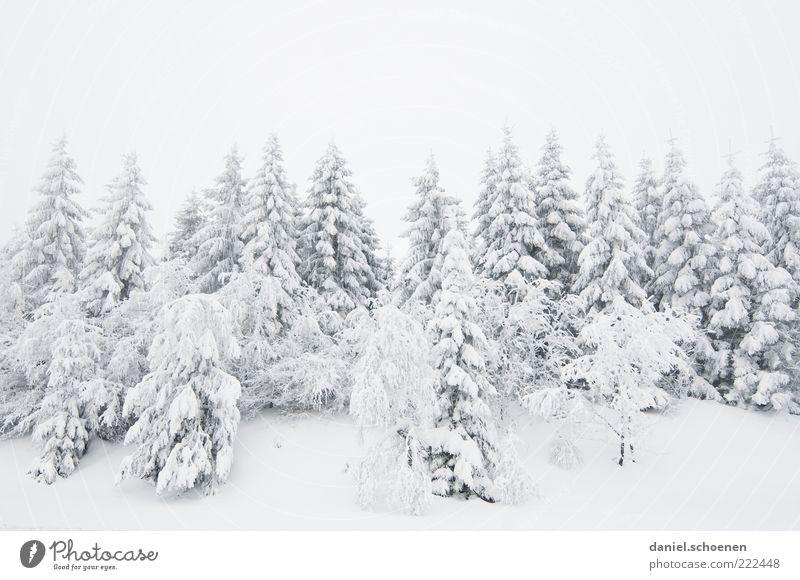 Schnee für alle !!! Natur weiß Baum Ferien & Urlaub & Reisen Winter Berge u. Gebirge Landschaft hell Eis Frost Tanne Winterurlaub Schwarzwald Nadelwald