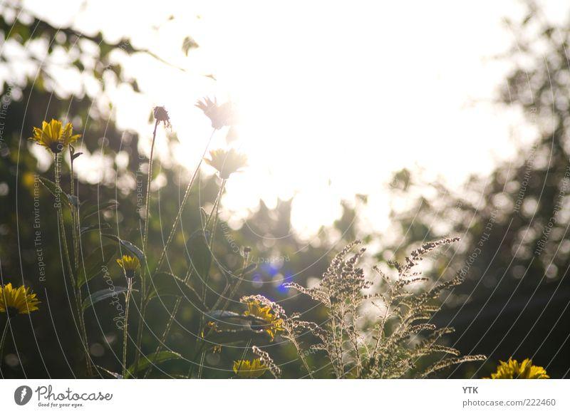 Golden November Natur Himmel schön Pflanze gelb Blüte Luft Umwelt Zeit ästhetisch Wachstum Sträucher Wandel & Veränderung natürlich Blühend leuchten