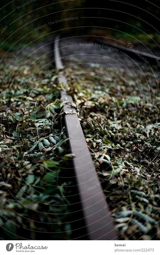 Renaturisierung Natur alt Pflanze Blatt dunkel Umwelt Wachstum verfallen Gleise Verkehrswege Grünpflanze Perspektive bewachsen Unkraut