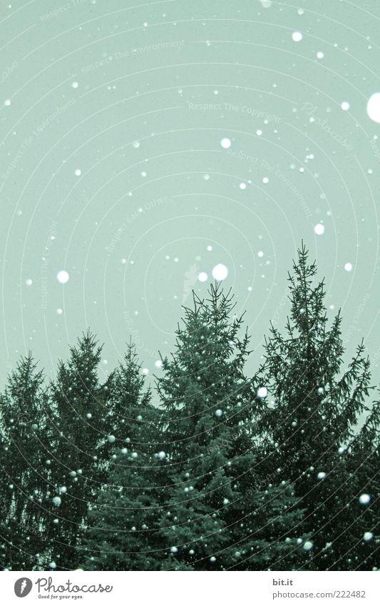 Einweg-Christbaum-Kugeln Umwelt Himmel Winter Klima Schnee Schneefall Baum kalt grün Tanne Schneeflocke Winterwald Winterstimmung Wintertag Flocke Farbfoto