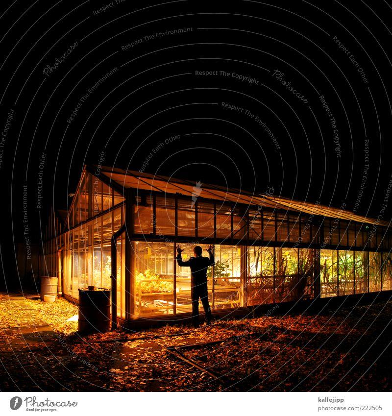 der gärtner wars Mensch Mann Pflanze Haus Erwachsene dunkel Fenster Leben Garten Beleuchtung maskulin Wachstum stehen beobachten Versuch Fensterscheibe