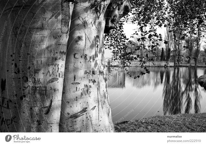 liebesbaum Natur alt Baum Pflanze Ferne Umwelt Landschaft Garten Glück Küste Park Kunst Freizeit & Hobby Ausflug Tourismus Schriftzeichen