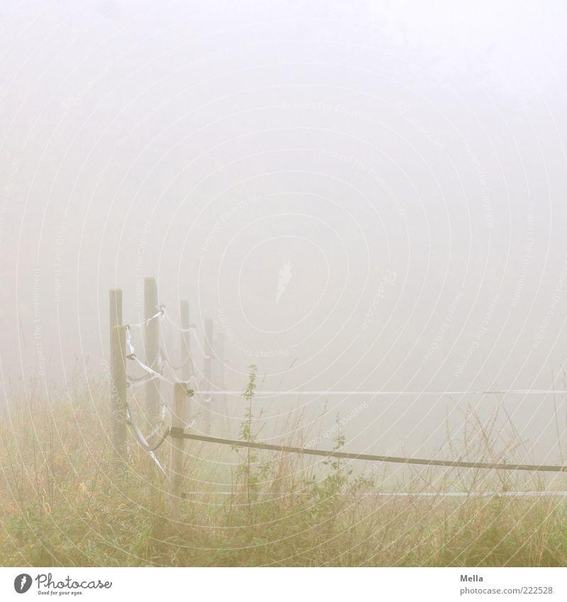 Misty November Umwelt Natur Landschaft Herbst Wetter Nebel Gras Weide Zaun Weidezaun natürlich trist grau grün ruhig trüb Ferne Farbfoto Gedeckte Farben