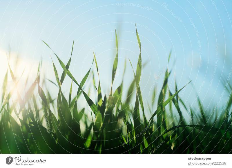 Auf dem Feld Landwirtschaft Ackerbau wachsend Wachstum Detailaufnahme Frühling Sommer natürlich Natur Nahaufnahme Gras Sämlinge Gerste