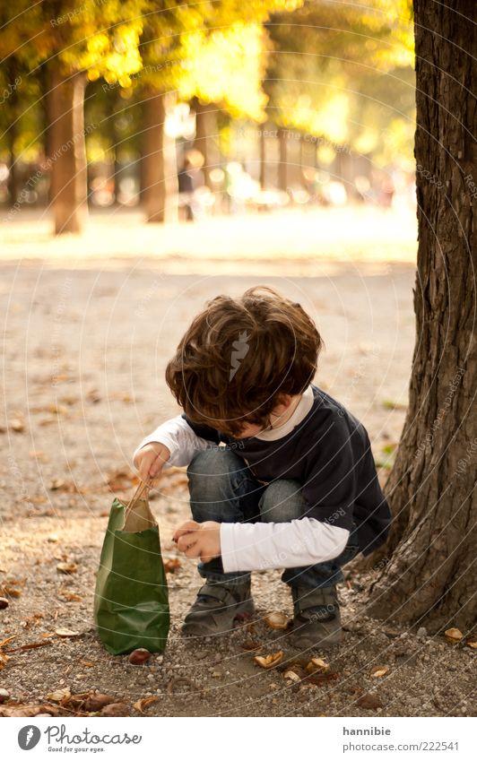Sammel-Leidenschaft Freizeit & Hobby Kind Junge Kindheit 1 Mensch 3-8 Jahre Baum Park Herbst Kastanienbaum Sammlung Suche Tüte hocken Allee Baumstamm Baumrinde