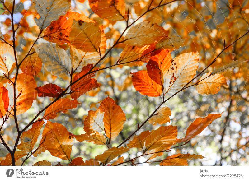 tag 329 Natur Pflanze Baum Blatt Wald natürlich schön orange rot Herbst Farbfoto mehrfarbig Außenaufnahme Menschenleer Tag Sonnenlicht Schwache Tiefenschärfe