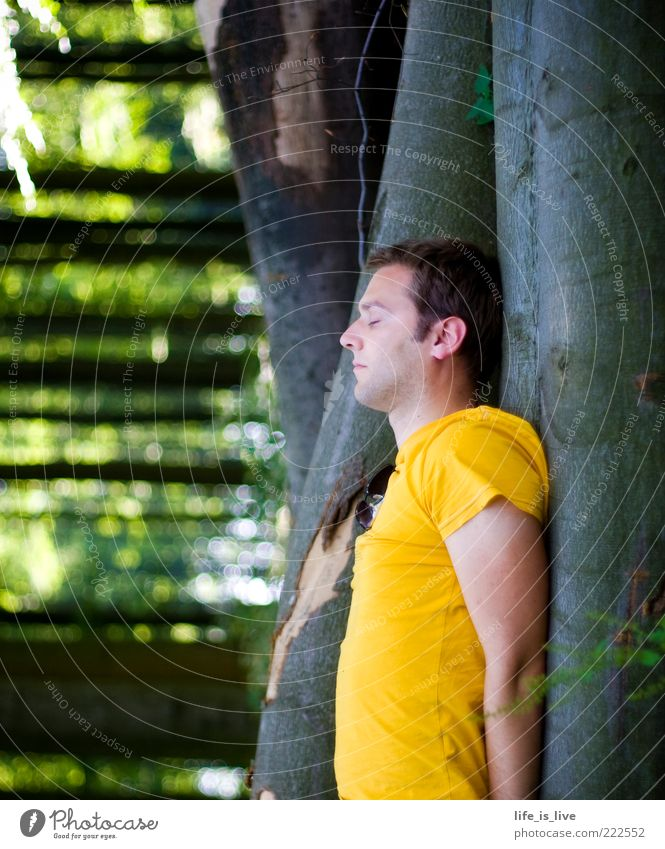 ich glaub, ich steh im Wald Natur Jugendliche Baum Sommer ruhig Einsamkeit gelb Wald Leben Erholung Gefühle Freiheit träumen warten Zufriedenheit maskulin