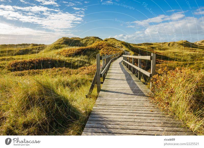 Landschaft in den Dünen auf der Insel Amrum Erholung Ferien & Urlaub & Reisen Tourismus Natur Wolken Herbst Küste Nordsee Brücke Wege & Pfade blau Umwelt