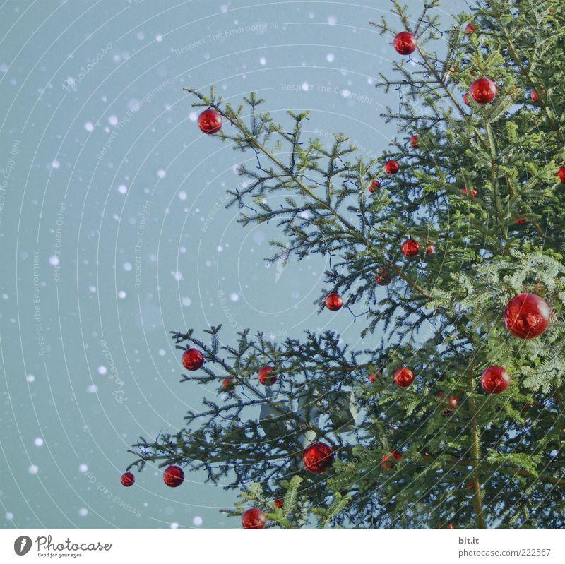 Schneeflöckchen... (VI) Weihnachten & Advent Himmel Baum grün blau rot Winter Schneefall Stimmung Feste & Feiern glänzend Dekoration & Verzierung Weihnachtsbaum