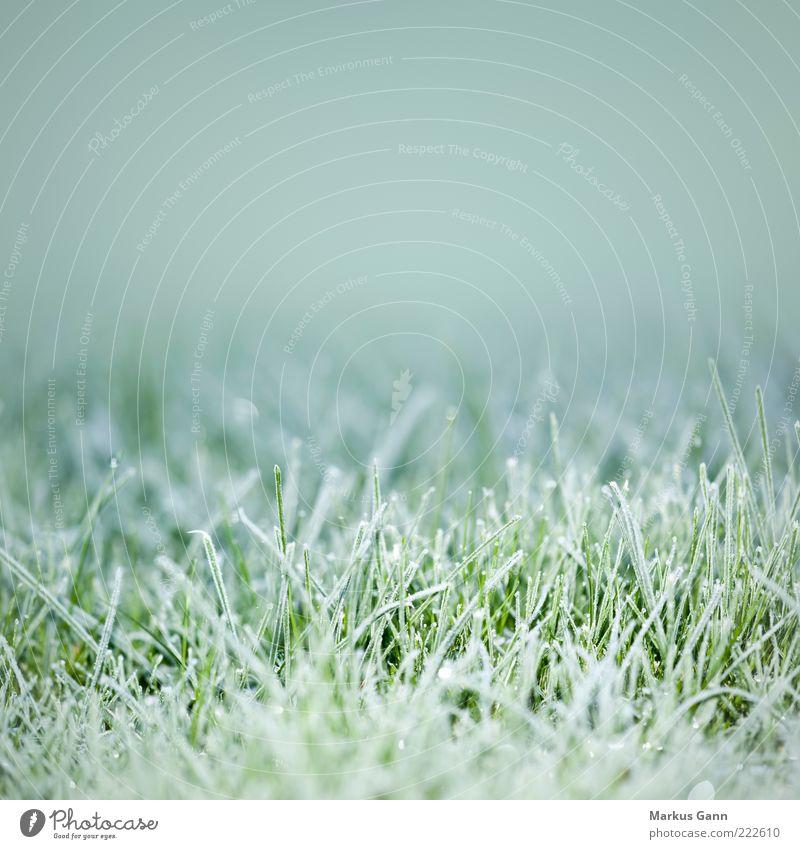 Frost Natur grün Pflanze Winter Wiese kalt Gras grau Wetter Eis Frost Rasen Symbole & Metaphern gefroren frieren November