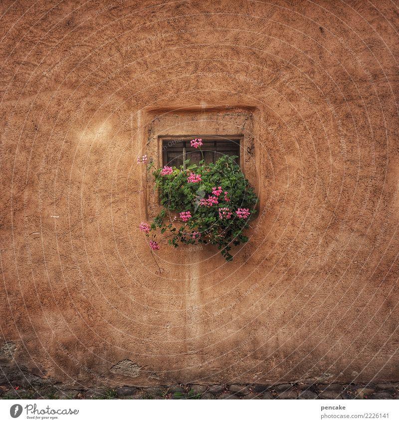 quadratwurzel Pflanze Blume Altstadt Haus Gebäude Architektur Mauer Wand Fenster Fröhlichkeit niedlich retro Stadt Idylle Pelargonie Quadrat Putz historisch alt