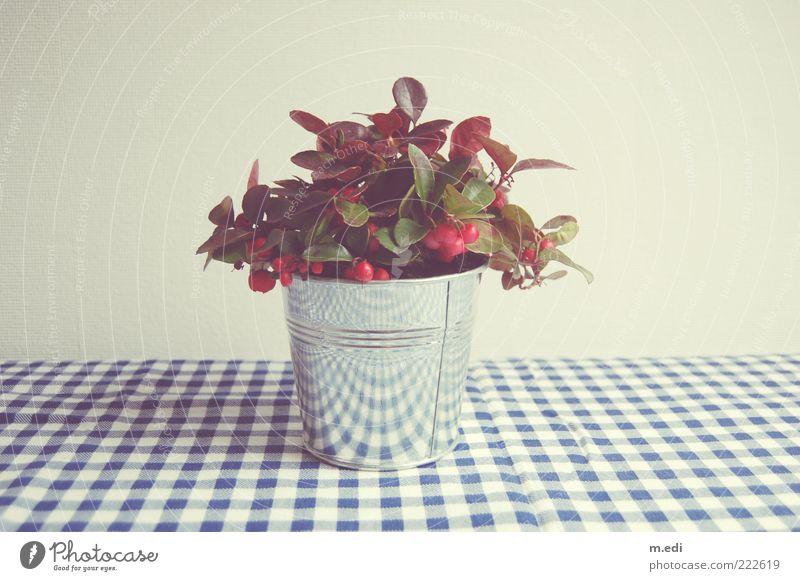 ich weiß es ist schief weiß blau Pflanze glänzend Stoff silber kariert Blech Topfpflanze Stechpalme