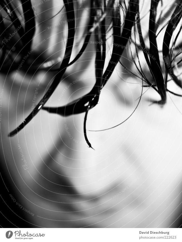 Wet hair Mensch maskulin Junger Mann Jugendliche Erwachsene Kopf Haare & Frisuren Gesicht Auge Nase 1 18-30 Jahre Gefühle Stimmung nass feucht Pony Stil