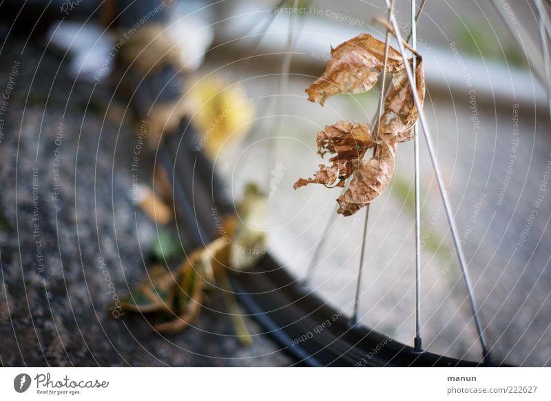 unter die Räder gekommen (LT Ulm 14.11.10) Blatt Straße Herbst Fahrrad Verkehr Perspektive Wandel & Veränderung Vergänglichkeit Asphalt festhalten Kontakt Mobilität Rad Herbstlaub Reifen gefangen