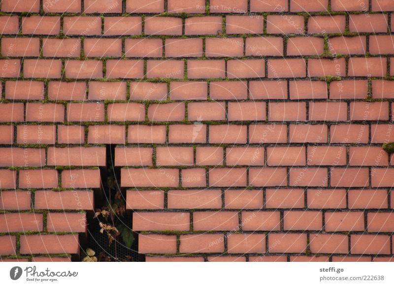 mit dem Weihnachtsbaum durch die Wand? Interpretationsspielraum! Weihnachten & Advent Baum rot Mauer Anti-Weihnachten außergewöhnlich Fassade kaputt Kreativität