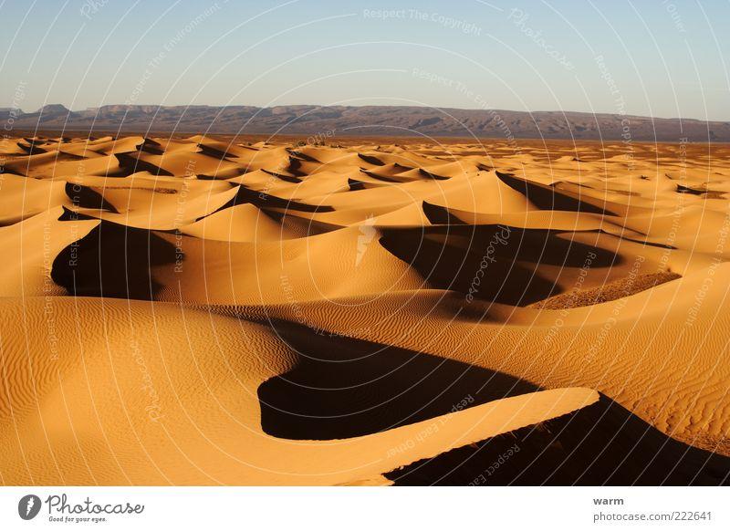 abends in der Sahara Ferne Freiheit Natur Landschaft Sand Wolkenloser Himmel Schönes Wetter Wärme Wüste Düne natürlich braun gelb gold Vorsicht ruhig demütig