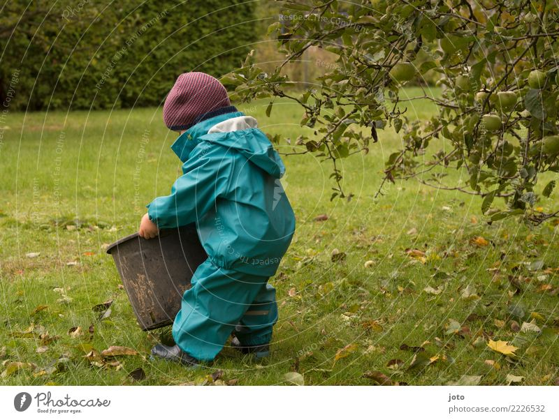 ganz schön schwer Kind Blatt Freude Herbst Wiese Garten Ausflug Zufriedenheit niedlich Hilfsbereitschaft entdecken Mütze Kleinkind Vorfreude Herbstlaub