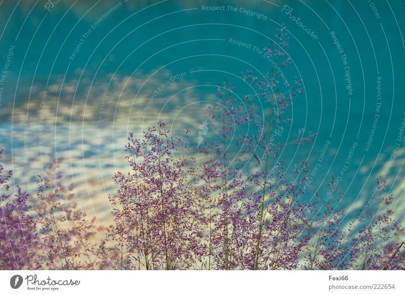 Nordischer Sommer Wasser blau Sonne schön Pflanze ruhig Einsamkeit gelb kalt Erholung Gras Bewegung See Stimmung Kraft