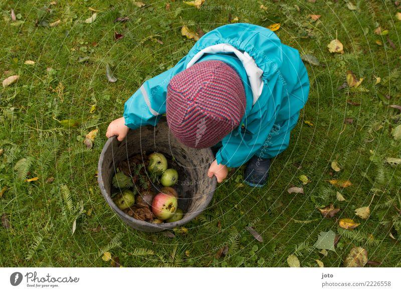 Apfelsammlung Kind Gesunde Ernährung Blatt Freude Herbst Gesundheit Wiese Garten Zufriedenheit Frucht niedlich Hilfsbereitschaft entdecken lecker Gelassenheit