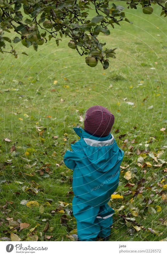 komme ich da ran? Kind Blatt Freude Herbst Gesundheit Wiese Garten hoch niedlich Hoffnung entdecken Apfel Mütze Kleinkind Herbstlaub herbstlich