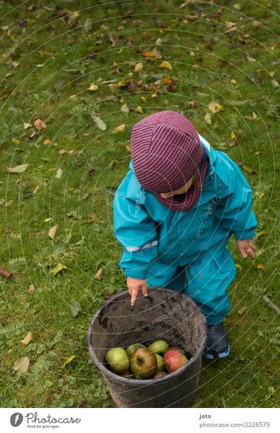 Ich helfe Apfel Spielen Garten Kindererziehung lernen Gartenarbeit 1-3 Jahre Kleinkind Natur Herbst Blatt Wiese Neugier niedlich anstrengen entdecken