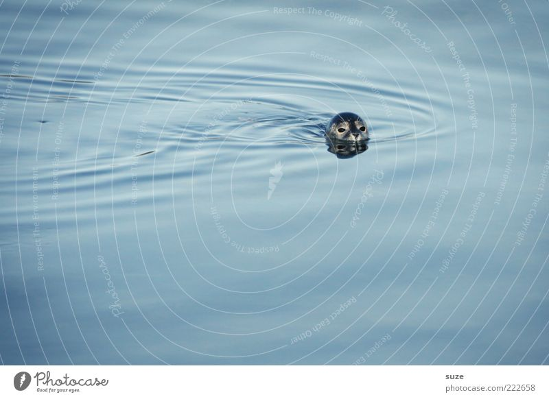 HAPPY BIRTHDAY PHOTOCASE! Natur blau Wasser Meer Tier Umwelt Kopf Schwimmen & Baden Wildtier wild Urelemente niedlich Tiergesicht Im Wasser treiben Robben Seehund