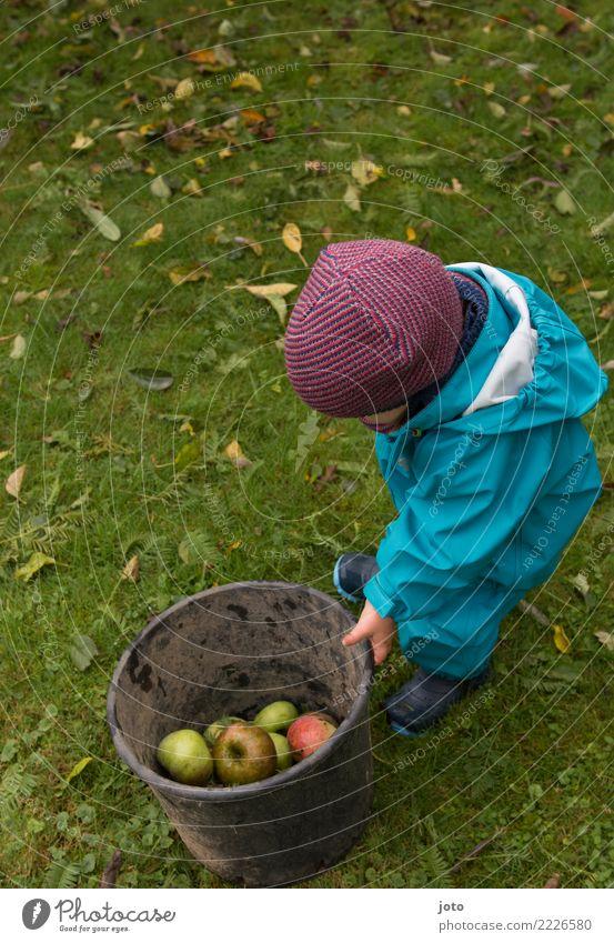 halbvoll Frucht Apfel Freude Freizeit & Hobby Spielen Garten lernen Kind Kindheit 1 Mensch 1-3 Jahre Kleinkind Umwelt Natur Herbst Blatt Wiese Mütze beobachten