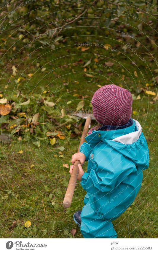 Laub harken Kind Blatt Freude Herbst Wiese Garten Zufriedenheit niedlich Hilfsbereitschaft entdecken Mütze Kleinkind Herbstlaub herbstlich anstrengen