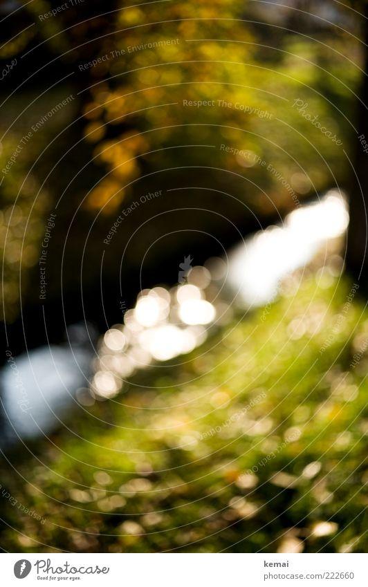 HAPPY BIRTHDAY PHOTOCASE! Umwelt Natur Landschaft Pflanze Wasser Sonnenlicht Herbst Schönes Wetter Baum Gras Blatt Grünpflanze Bach hell grün Unschärfe Farbfoto