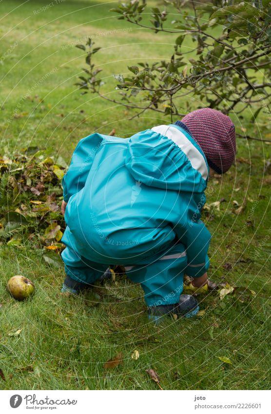 Kleine Entdeckungsreise Frucht Apfel Freude Freizeit & Hobby Spielen Garten lernen Kind Kindheit 1 Mensch 1-3 Jahre Kleinkind Umwelt Natur Herbst Blatt Wiese