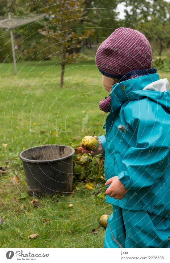 noch einen gefunden Frucht Apfel Freude Freizeit & Hobby Spielen Garten Kind lernen Kindheit 1-3 Jahre Kleinkind Umwelt Natur Herbst Blatt Wiese Mütze