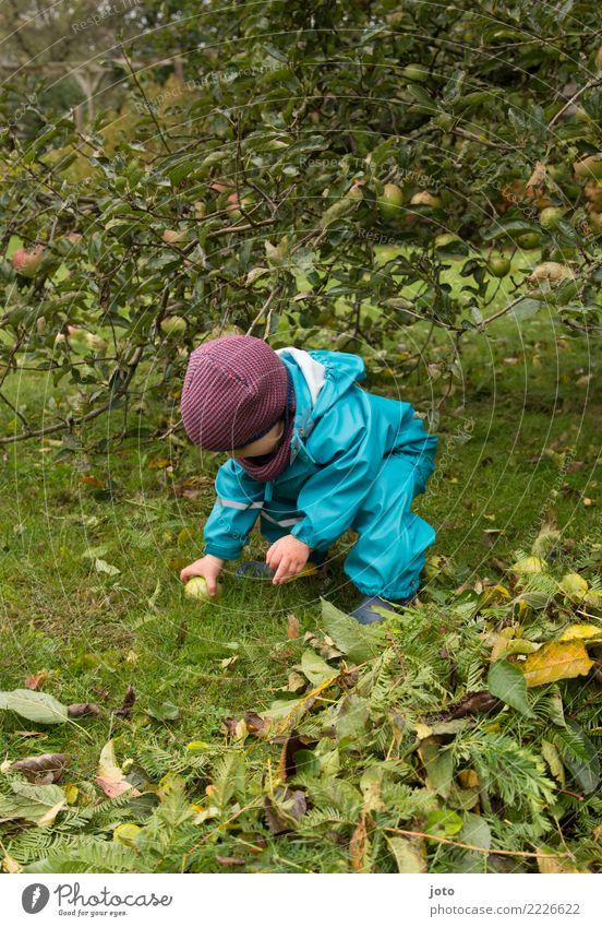 Äpfel einsammeln Frucht Apfel Freude Freizeit & Hobby Spielen Garten lernen Kind Kleinkind Kindheit 1 Mensch 1-3 Jahre Umwelt Natur Herbst Blatt Wiese Mütze