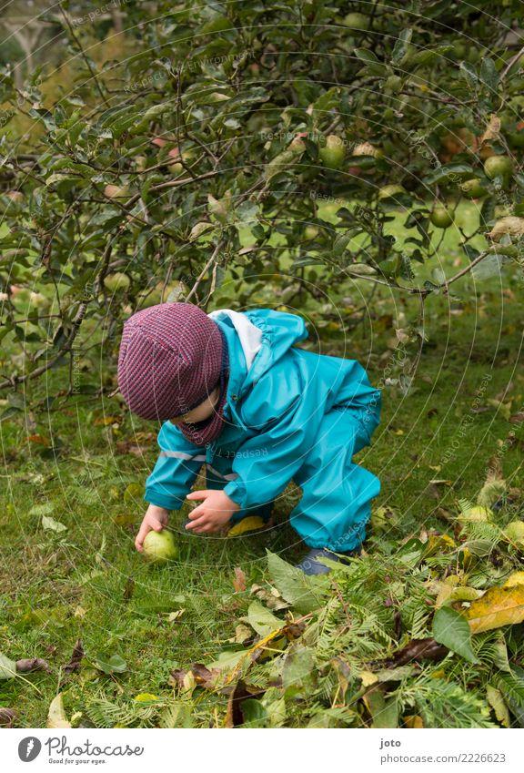 Apfel gefunden Gesunde Ernährung Blatt Freude Herbst Gesundheit Wiese Garten Ausflug Zufriedenheit lernen niedlich berühren entdecken lecker Gelassenheit