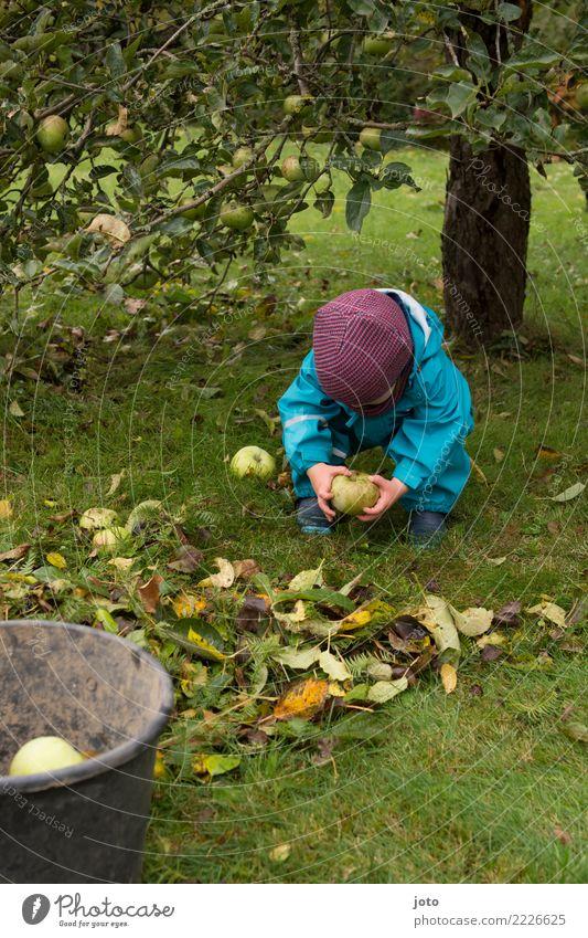 aufheben Kind Gesunde Ernährung Blatt Freude Herbst Wiese Garten lernen niedlich Hilfsbereitschaft entdecken Apfel Mütze Kleinkind Herbstlaub herbstlich