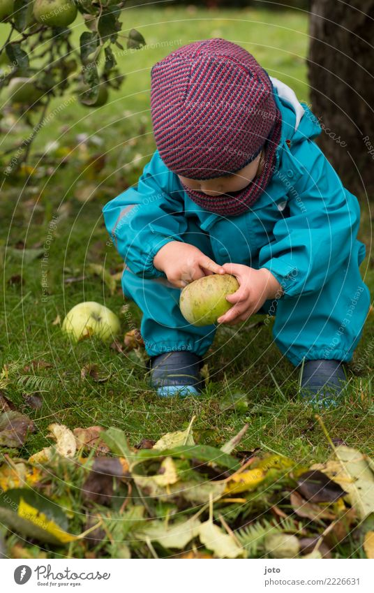 Apfel aus dem Garten Frucht Ernährung Bioprodukte Saison Kinderspiel Ausflug Freiheit Erntedankfest Kleinkind 1-3 Jahre Herbst Blatt Herbstlaub Wiese