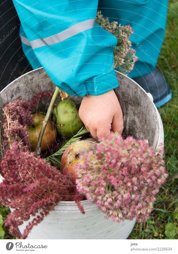 Gartenschätze Apfel Ernährung Gesundheit Kinderspiel Kleinkind Hand 1-3 Jahre Herbst Blume Wiese Gummistiefel berühren entdecken lernen Zufriedenheit achtsam