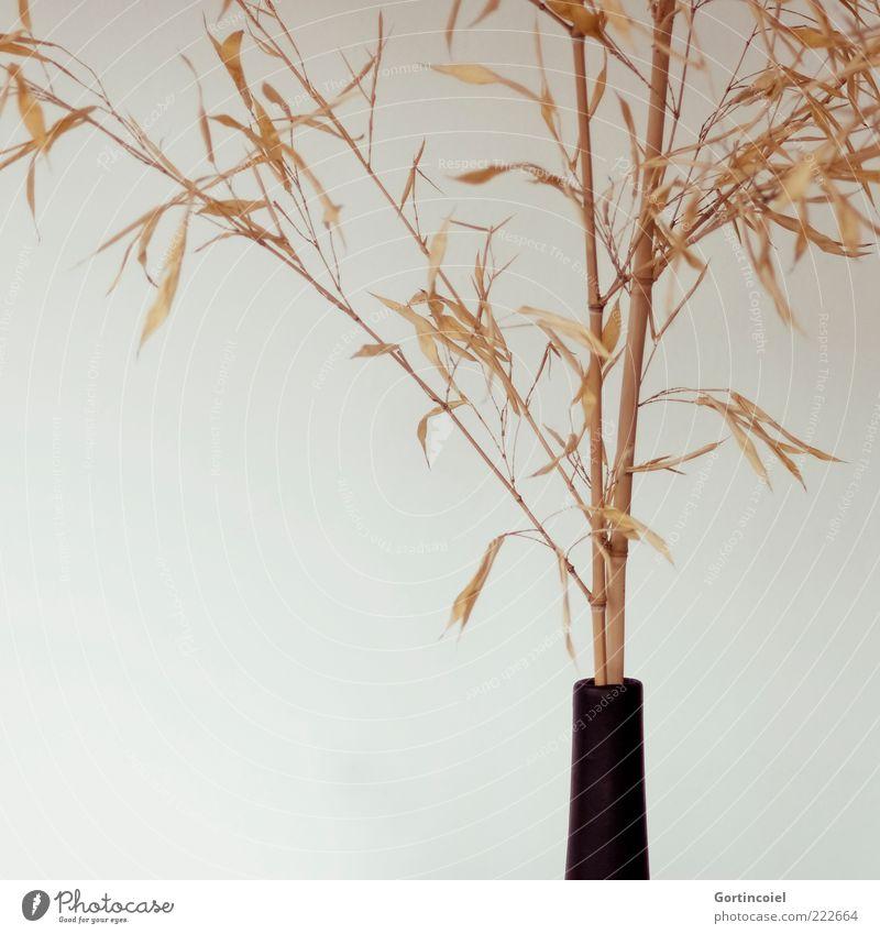Asian Lifestyle Stil Design Dekoration & Verzierung Pflanze Blatt trocken Bambus Vase minimalistisch Bambushalm Bambusrohr Farbfoto Gedeckte Farben