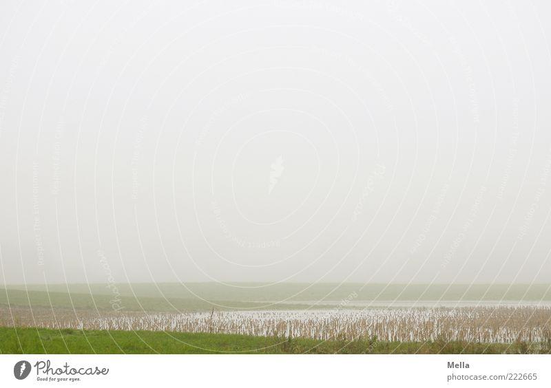 Sichtweite unter 100 m Umwelt Natur Landschaft Klima Wetter Nebel Wiese Teich See natürlich trist grau grün Einsamkeit Idylle Halm Stengel flach trüb ruhig