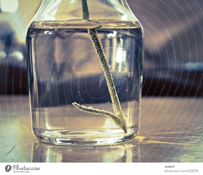 Fingerabdruck Wasser Glas Tisch ästhetisch stehen Stengel Luftblase Vase Pflanze Pflanzenteile Wasserspiegelung