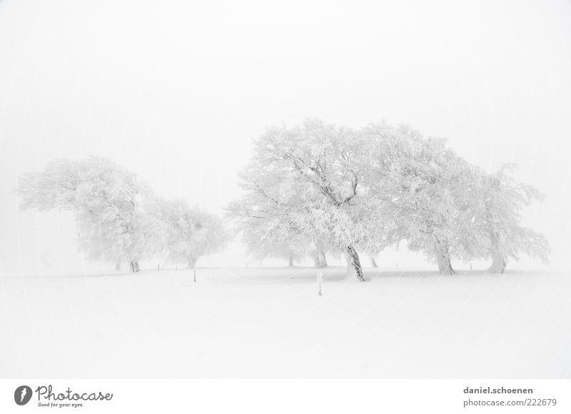 so, wer hat noch keinen Schnee ?? Winter Umwelt Natur Landschaft Klima Wetter Wind Nebel Eis Frost Baum hell weiß Schwarzwald Monochrom Gedeckte Farben