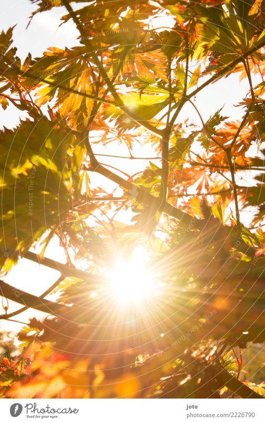 Herbstsonne Natur Schönes Wetter Baum Blatt Garten Park hell Wärme achtsam ruhig Energie Erholung Farbe Hoffnung Idylle Perspektive Sinnesorgane Umwelt Wachstum