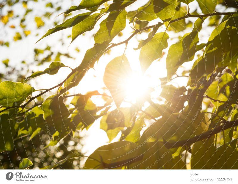 Transparente Blätter Natur grün Baum Erholung Blatt ruhig Wärme Umwelt Herbst Garten hell Park Wachstum Idylle Perspektive Schönes Wetter