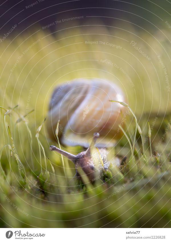 Stielaugen Natur Pflanze grün Tier ruhig gelb Umwelt Frühling Zeit braun Erde weich Ziel Moos Schnecke krabbeln