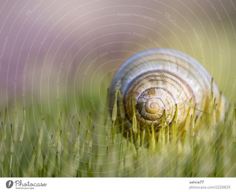 auf weichen Spitzen Natur grün ruhig Herbst Frühling braun Design Linie Erde rund Pause Schutz Sicherheit Moos