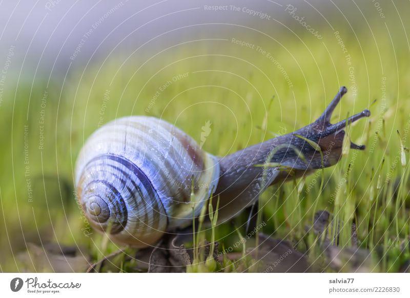 Wohn-mobil Natur Pflanze Tier Moos Schnecke frisch schleimig Spitze braun grün anstrengen Geschwindigkeit Mobilität Wege & Pfade krabbeln Fühler Antenne langsam