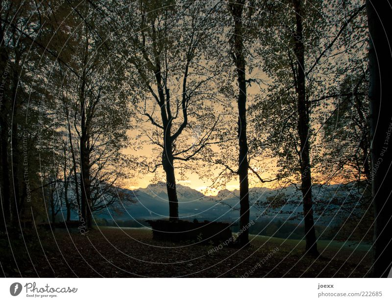 Glühen Natur Landschaft Himmel Sonnenaufgang Sonnenuntergang Herbst Schönes Wetter Baum Wald Alpen Berge u. Gebirge alt gelb schwarz ruhig Idylle