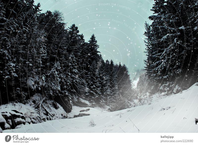 talfahrt Winter Schnee Winterurlaub Berge u. Gebirge Umwelt Natur Klima Klimawandel Wetter schlechtes Wetter Schneefall Pflanze Baum Wald Hügel Alpen Gipfel