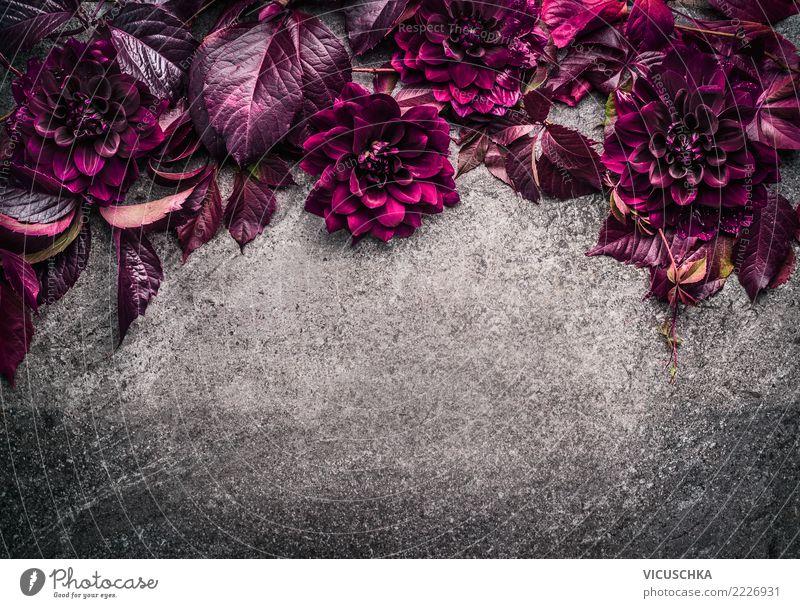 Hintergrund mit dunkel lila Blumen und Blättern Natur Sommer Pflanze Blatt Hintergrundbild Blüte Stil rosa Design Dekoration & Verzierung Ecke violett