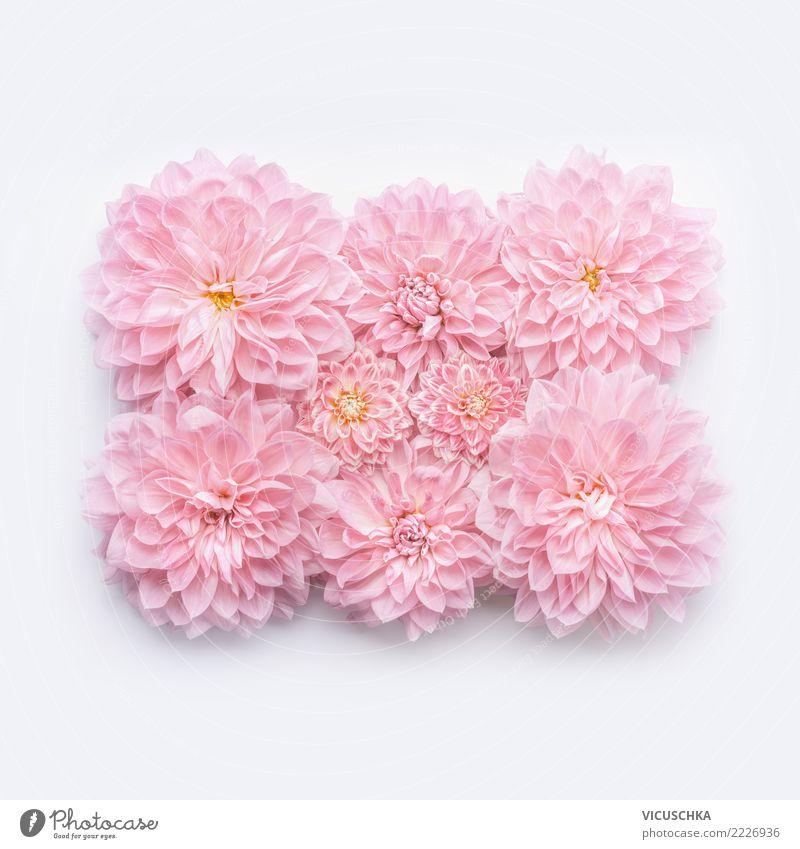 Pastell rosa Blumen layout Stil Design Feste & Feiern Valentinstag Muttertag Hochzeit Geburtstag Natur Pflanze Dekoration & Verzierung Blumenstrauß Zeichen